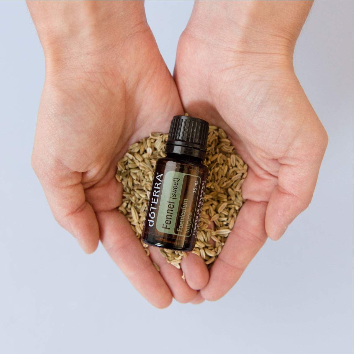 Woman's hands holding Fennel essential oil bottle and fennel seeds. Can you drink Fennel essential oil? When used in the proper amounts, Fennel oil can be safe to use internally.