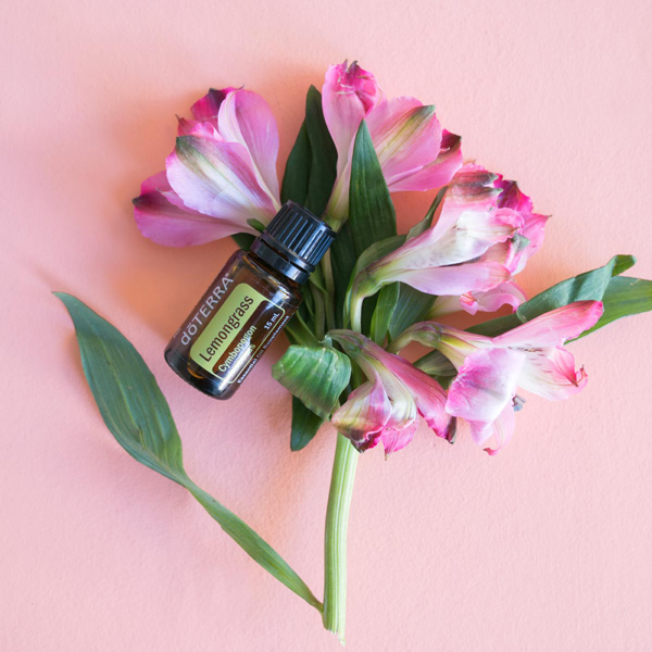 Pink flowers, green stem and leaves, bottle of doTERRA lemongrass oil. What is lemongrass essential oil used for? Lemongrass oil is used to promote healthy digestion, soothe anxious feelings, and create a comforting massage.
