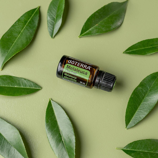 Tea Tree Oil Uses And Benefit Doterra Essential Oils Dōterra Essential Oils