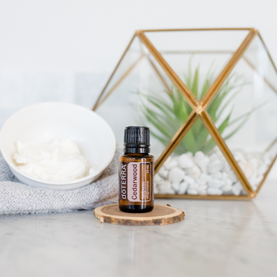 Cedarwood oil bottle. Skincare cream. Green plant. What are the benefits of Cedarwood essential oil? Cedarwood oil is useful for skin, massage, and creating a relaxing environment.
