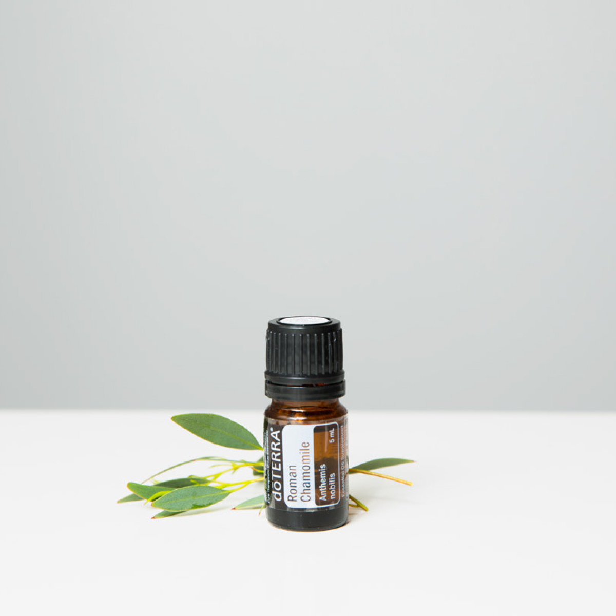 Bottle of Roman Chamomile oil in a small, white dish, surrounded by fresh green leaves on a wooden surface. How do you use Roman Chamomile essential oil for sleep? You can use Roman Chamomile oil for sleep by rubbing it on the bottoms of your feet or adding it to a bath before bed.