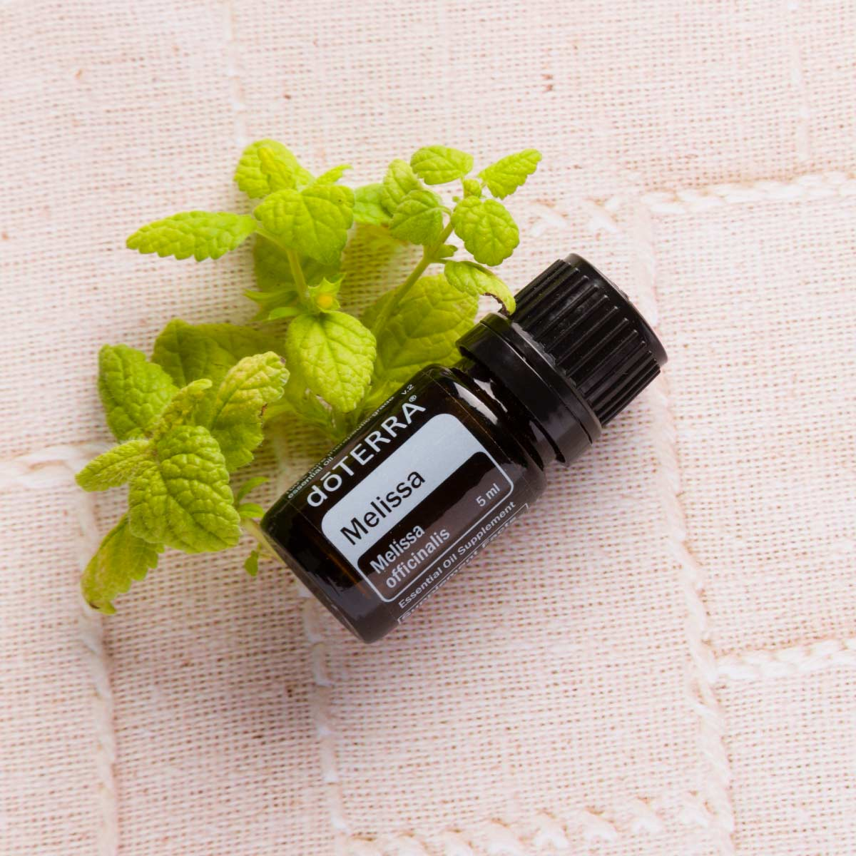 Bottle of Melissa essential oil next to fresh green leaves. Is Melissa essential oil good for skin. Melissa oil can be used in your skincare routine to help rejuvenate skin gently and naturally.