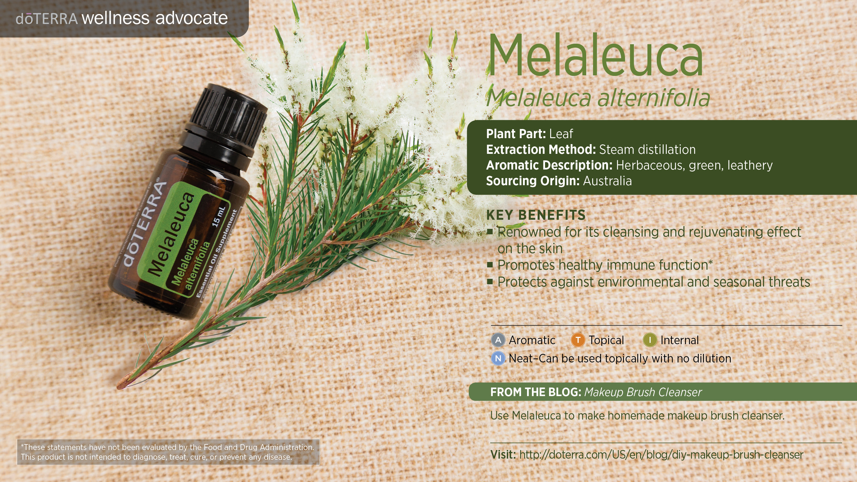 Doterra Melaleuca Essential Oil Uses Tea Tree Best