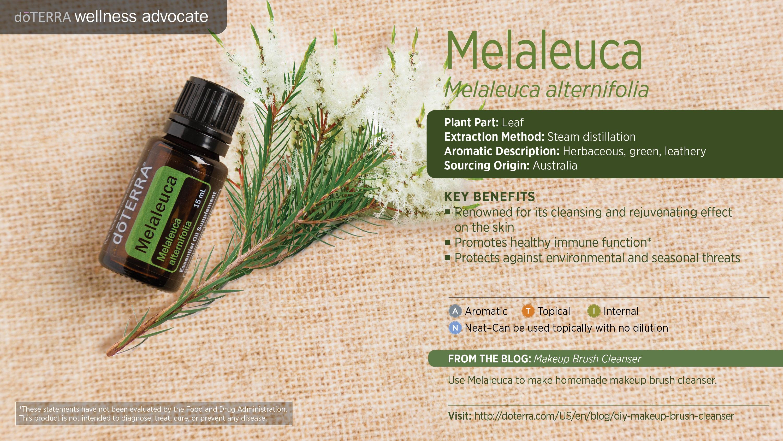Doterra Melaleuca Essential Oil Uses Tea Tree