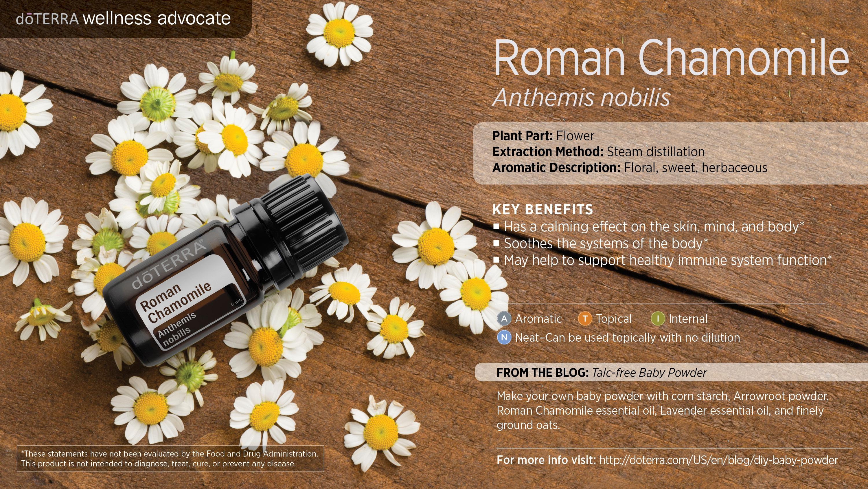 Roman Chamomile Oil Dōterra Essential Oils